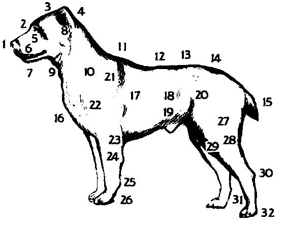 Стати собаки